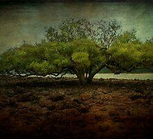 Wonder Tree Deux by Sonia de Macedo-Stewart