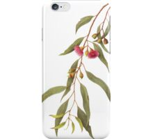 Eucalyptus leucoxylon - Yellow Box with Red Flowers iPhone Case/Skin