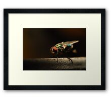 Pretty Pest Framed Print