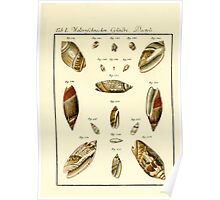 Neues systematisches Conchylien-Cabinet - 154 Poster