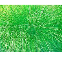 Abstract Grass photo painting Photographic Print