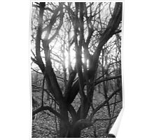 Winter Sunlight - Barnsley Wold Woods Poster