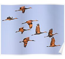 Sand Hill Cranes at Dawn Poster