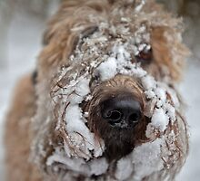 My Snowy Companion by Boston Thek Imagery