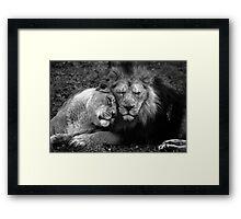 Asiatic Love. Framed Print