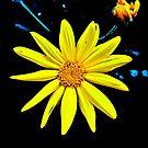 A Splash of Sunshine by Lyndy