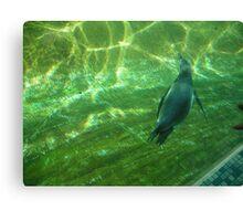 Penguin 2 Canvas Print