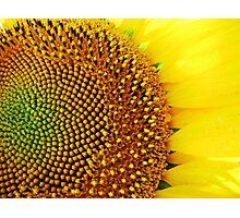 Yellow days! Photographic Print