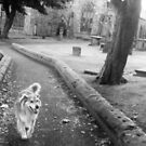 saz running from the church by xxnatbxx