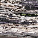 Driftwood photo painting by randycdesign
