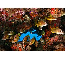 Fish in an underhang Photographic Print