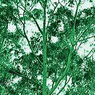 Eucalyptus Tree photo painting by randycdesign