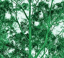 Eucalyptus Tree photo painting by randycdesign