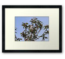 Mockingbirds are smart birds...... Framed Print