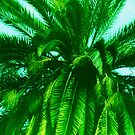 Palm Tree photo painting by randycdesign