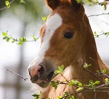 Foal in the Spring by LoriProPhoto