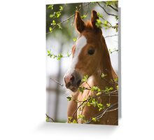 Foal in the Spring Greeting Card