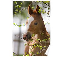 Foal in the Spring Poster