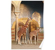 Happiness is a giraffe thing Poster