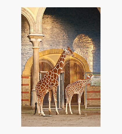 Happiness is a giraffe thing Photographic Print