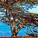 Sea Thru Tree photo painting by randycdesign