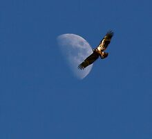 Eagle Moon by Jerry Segraves