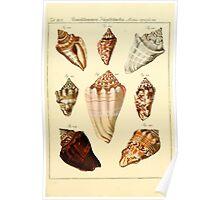 Neues systematisches Conchylien-Cabinet - 195 Poster