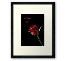 A Valentine Rose Framed Print