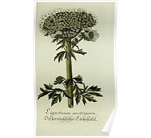 Plantarum Indigenarum et Exoticarum - Lukas Hochenleitter und Kompagnie 1788 - 218 Poster