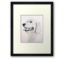 Golden Retreiver Framed Print