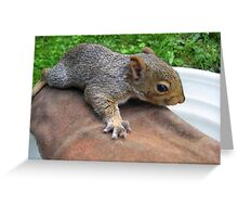Baby Squirrel (2) Greeting Card