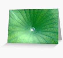 Droplet of Water in Center of Water Lily Greeting Card