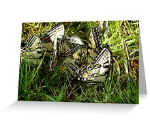 Cow Pie Beauty Greeting Card