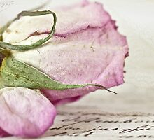 Vintage Paper Rose by Evelyn Flint - Daydreaming Images