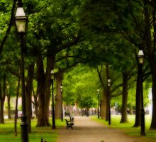 Path Through Salem Common by Monica M. Scanlan