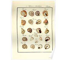 Neues systematisches Conchylien-Cabinet - 395 Poster