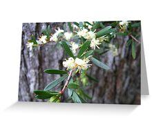River tridentbush, Westbury Forest Reserve, Tasmania Greeting Card