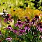 Float Like a Butterfly by Lois  Bryan