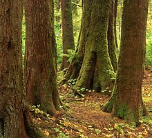 Hoh Rain Forest by Mike Norton