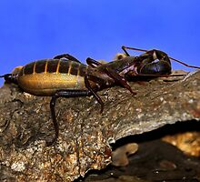 Scorpion - Sonoran Desert Museum - Tucson, Arizona by John Absher