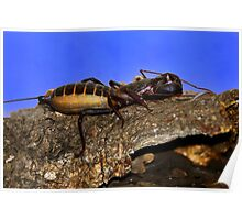 Scorpion - Sonoran Desert Museum - Tucson, Arizona Poster