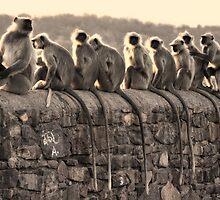 Monkey Tails by Brendan Buckley