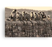 Monkey Tails Canvas Print