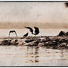 Crow Sanctuary.......... by JennyMac