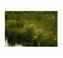 Wetlands - A View Art Print
