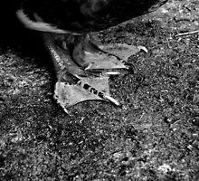 untitled #129 by Bronwen Hyde