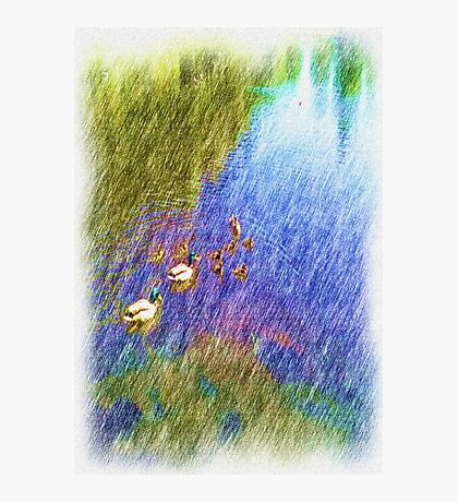 duck swiming in a pond Photographic Print