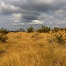 African Landscape - Grass and Sky by SpottiClogg