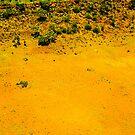 living desert by Bruce  Dickson
