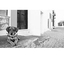 Dog with scarf, Santorini Photographic Print